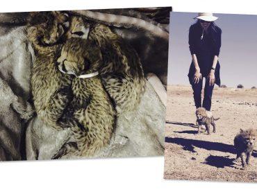 Engajada em causas sociais, Angelina Jolie também se preocupa com os animais selvagens. Aos detalhes!