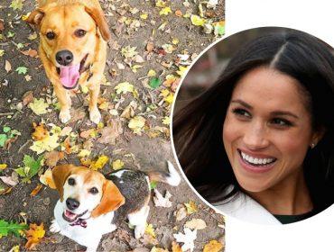 Meghan Markle é criticada por se mudar para Londres e deixar o cachorro nos EUA