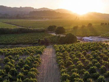 Com mais de 4 mil vinícolas, Califórnia é destino ideal para os amantes de vinho