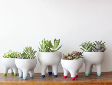 Lá em Casa: composé de vasos à venda no 1º endereço fixo do Armazém Marton