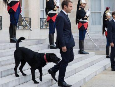 Conheça o integrante mais popular do Palácio do Eliseu em Paris. E não é o presidente Macron…