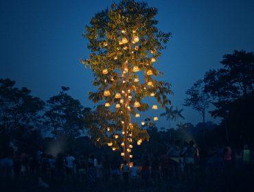 Natura se inspira no Natal brasileiro e decora castanheira da Amazônia para a data