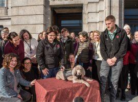 Museu de Boston contrata cachorro para proteger obras de arte de ataques de traças
