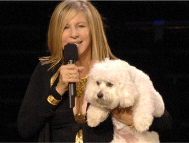 Deu ruim! Barbra Streisand manda clonar sua pet e é criticada por ONG de proteção animal