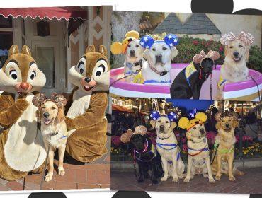 Estes cães de serviço se divertindo na Disney é a coisa mais fofa que você verá hoje