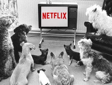Estudo revela que os pets estão entre os melhores companheiros para assistir série. Aos detalhes!