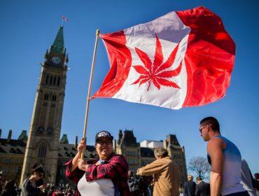 Wall Street vai à loucura com empresas canadenses ligadas à produção de… maconha!