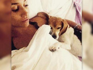 """Sua """"cachorresa"""" real: cãozinho adotado em abrigo por Meghan Markle terá sua própria biografia"""
