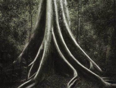 No Dia da Árvore se inspire nas fotos de Cássio Vasconcellospara celebrar essas gigantes tão desprezadas atualmente