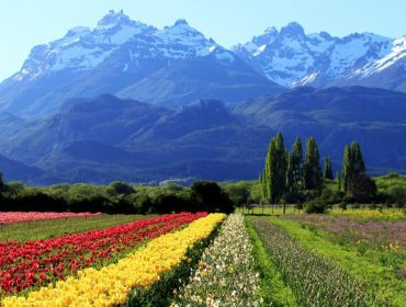 Sete destinos nacionais e internacionais para curtir a estação das flores