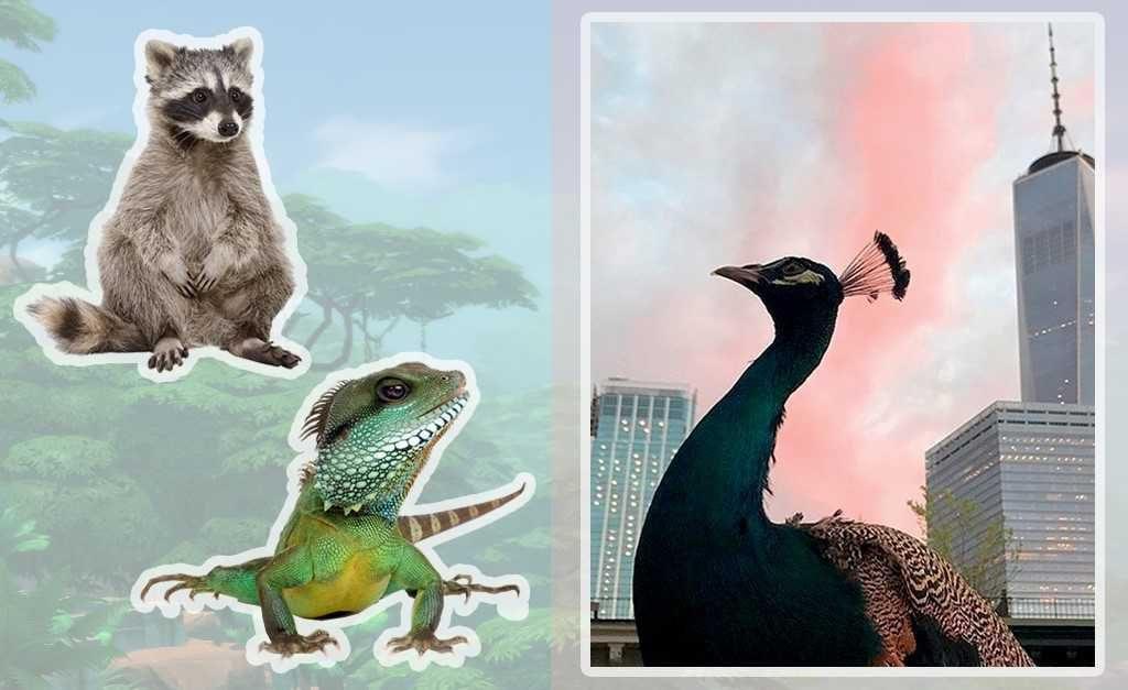 18758b594 O novo símbolo de status em Nova York é ter um cachorro de 100 kg ou um  animal exótico como lhama e pavão