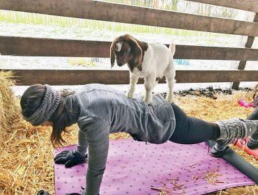 Elite gasta bilhões de dólares com yoga com cabras, carvão de R$ 540 o quilo e purificadores vaginais