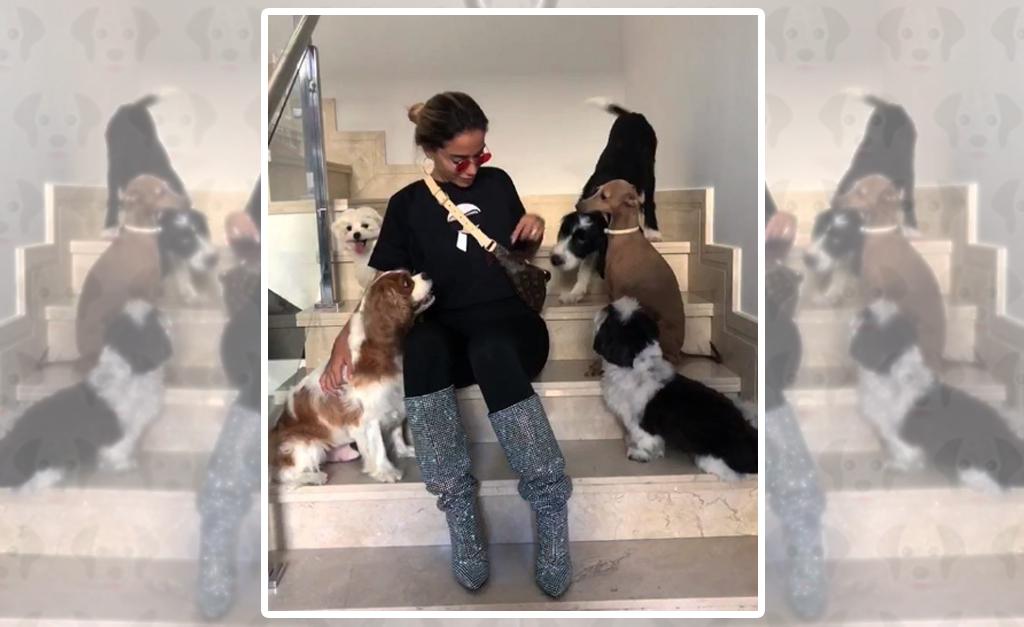 78266e285 Cachorro de Anitta destrói novos figurinos da cantora mas ela se ...