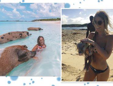 Passaporte na mão: conheça os porcos nadadores das Bahamas e se apaixone perdidamente