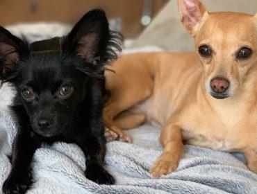 Zoe e Zeca, cachorrinhos da jogadora Marta, têm perfil no Instagram e fazem o maior sucesso