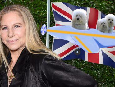 Barbra Streisand fretou jatinho para suas cachorras assistirem show em Londres. Entenda!