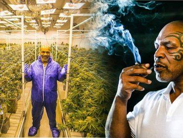 Mike Tyson revela que fuma o equivalente a R$150 mil por mês de maconha… Oi?
