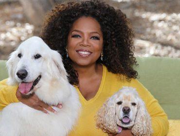 Mulheres de sucesso têm cachorros: entenda por que os animais de estimação podem ajudar elas a chegar lá