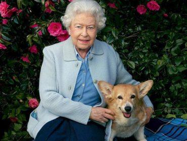 De tratamentos especiais e refeições gourmet, saiba tudo sobre os cães da Rainha Elizabeth, que levam vida de reis