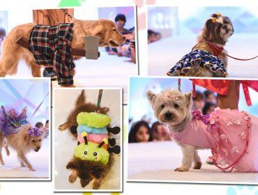 Carnaval do Patio Higienópolis tem desfile e palestra para os pets e feira de adoção