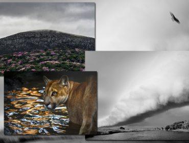 Araquém Alcântara, João Farkas e Luciano Candisani levam projeto 'Documenta Pantanal' à SP Arte