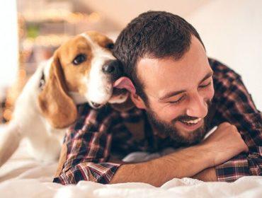 Como nossos cães se sentem com a mudança da rotina da casa imposta pela quarentena? Especialista de Yale explica