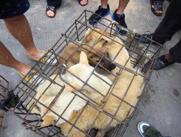 Por causa da pandemia de Covid-19, metrópole chinesa sai na frente e bane o consumo de carne de gato e cachorro