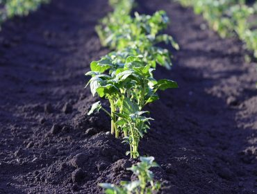 Horta medicinal: Naturopata do Hospital das Clínicas explica quais plantas podem tornar sua vida mais saudável