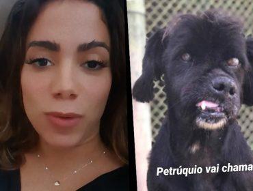 Pet lover assumida, Anitta apresenta Petrúquio, conta como está sua matilha e se emociona ao pedir ajuda para encontrar mais um cachorrinho