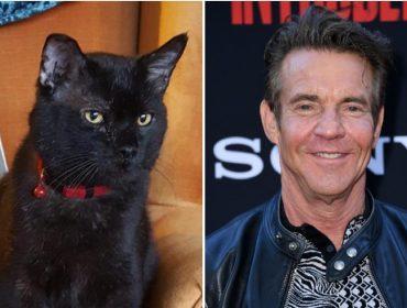 """Dennis Quaid adota gatinho preto batizado com seu nome: """"Não resisti à fofura dele"""""""
