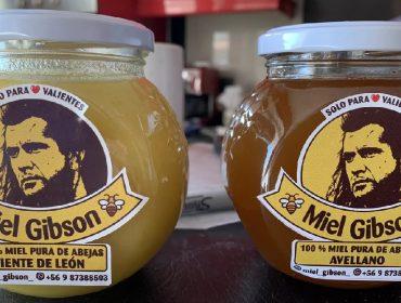 Chilena ameaçada de processo por Mel Gibson faz acordo para continuar vendendo mel com o nome do astro