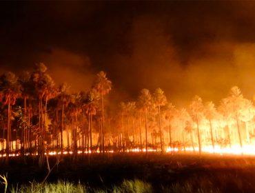 Christian Blanco mobiliza grupo de influenciadores para atuar na tragédia do Pantanal. Saiba mais!
