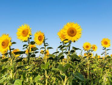 É primavera! A estação mais colorida do ano começa nesta terça e Glamurama revela os significados de 10 flores para você se inspirar