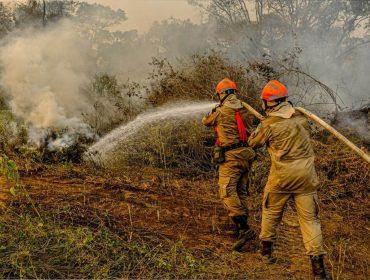 Ajude o Pantanal: conheça organizações que lutam para reduzir os danos do incêndio que devasta a região