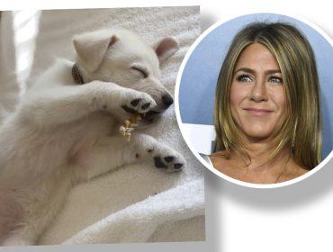 Jennifer Aniston tem uma novo amor e ele atende pelo nome de Lord Chesterfield