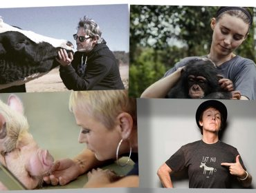Dia Mundial do Veganismo: Nutricionista entrega um guia completo sobre o estilo de vida que cresce com a ajuda de famosos