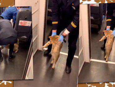 Vídeo de gatinho sendo retirado por funcionário de trem na China viraliza na internet. Vem ver a cena!