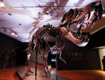 Fóssil de T-Rex que viveu há 67 milhões de anos é leiloado nos EUA por mais de R$ 178 milhões