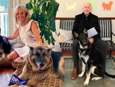 Joe Biden retoma antiga tradição e os cachorros vão voltar à Casa Branca. Conheça os pets dos presidentes americanos
