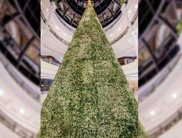 Shopping Pátio Higienópolis vai celebrar o Natal com árvore 'indoor' de 25 metros. Vem ver!