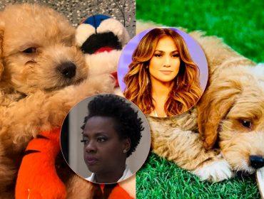 Jennifer Lopez e Viola Davis são alvos de campanha da PETA que visa combater a venda de pets