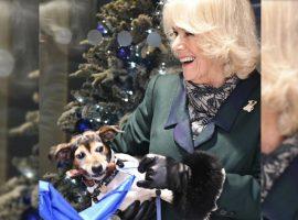 Camilla Parker Bowles faz aparição pública com sua cachorrinha Beth e as especulações não param… o nome seria uma 'homenagem' à sogra?