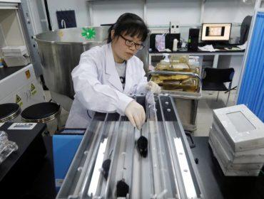 O estudo foi conduzido por professor Qu Jing, do Instituto de Zoologia da Academia Chinesa de Ciências
