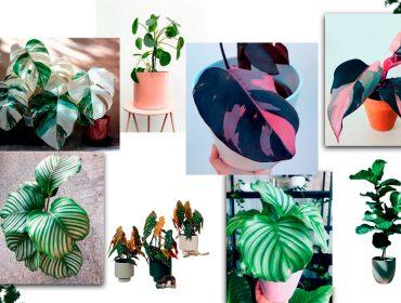 Já ouviu falar em 'it planta'? Assim como as 'it girls', elas estão na moda, são cobiçadíssimas e transformam o lar em uma selva particular