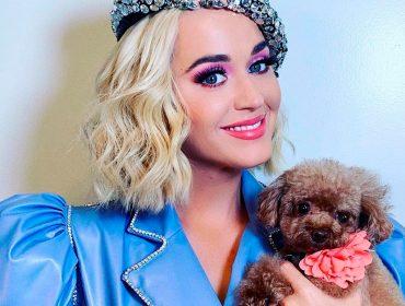 Katy Perry é criticada pelos fãs ao revelar que seu cachorro, Nugget, segue dieta vegana. Oi?