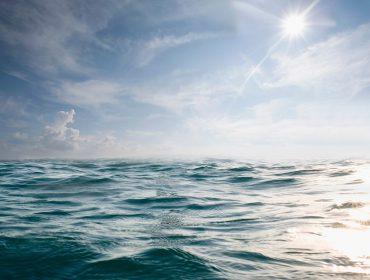 Esperança e atitude! Especialistas em Conservação da Natureza relatam quais as perspectivas para o meio ambiente em 2021