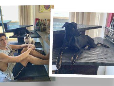 Reynaldo Gianecchini aumenta a família de pets com empurrãozinho de Heloisa Perissé. Bem-vinda Sara
