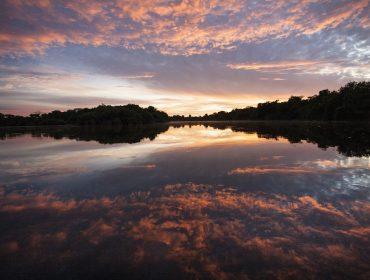 Com aproximação da temporada de seca, leilão de obras de arte pretende captar R$ 1 milhão para brigadas anti-incêndio no Pantanal