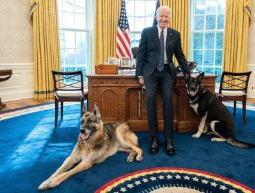 Mascotes de Joe Biden são afastados da Casa Branca por mau comportamento. E o presidente falou sobre o assunto!