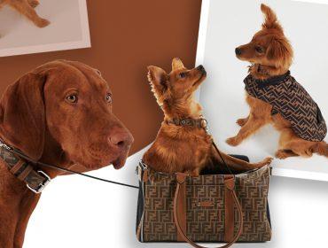 Desejo do dia: a linha de acessórios para cãezinhos estilosos e elegantes da Fendi